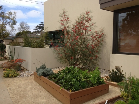 A Dazzling Plant You Ve Never Seen Before Sage Outdoor Designs